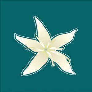 logo nl Cafe Casa Grande Colombia